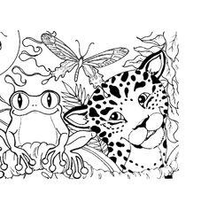 236x236 Rainforest Color Pictures Rainforest