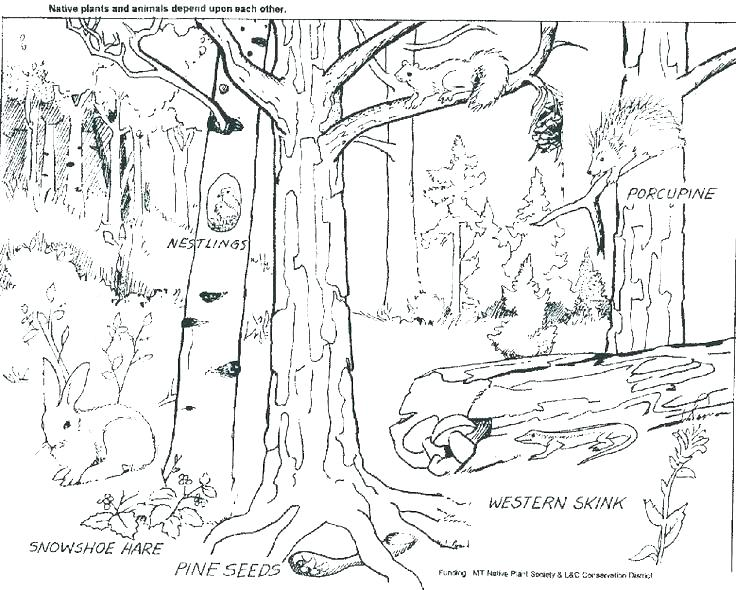 736x590 Free Printable Rainforest Coloring Pages Background Jungle