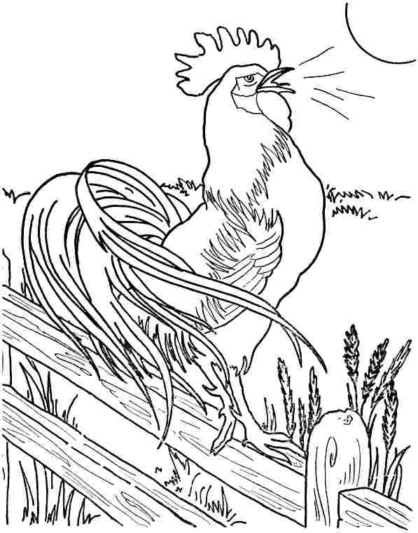 Free Rooster Coloring Pages
