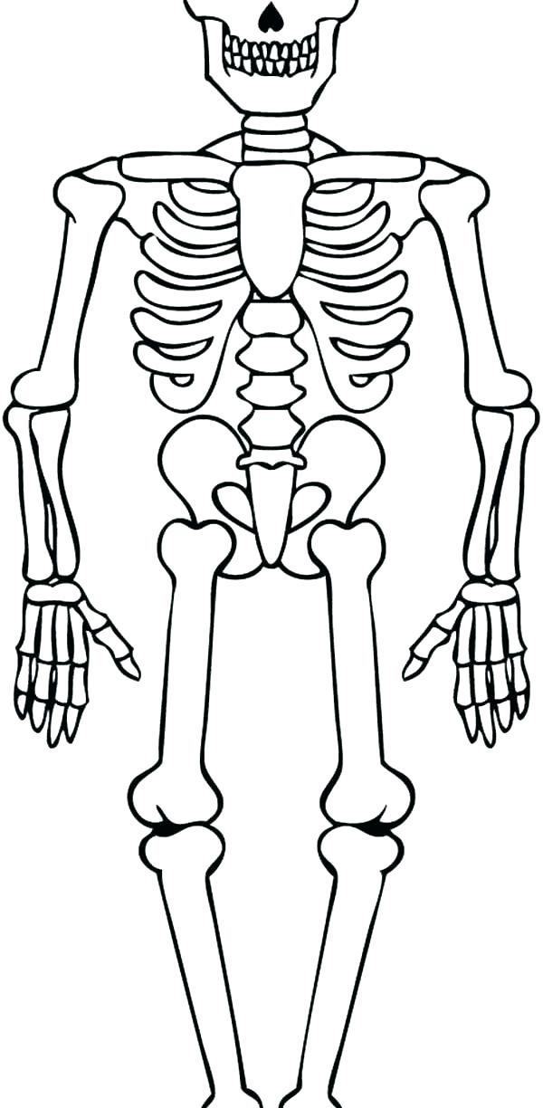 600x1224 Skeleton Coloring Sheet Skeleton Coloring Sheet Skeleton Colouring