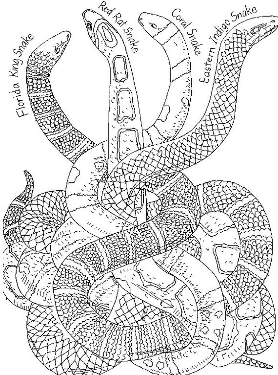 Free Snake Coloring Pages