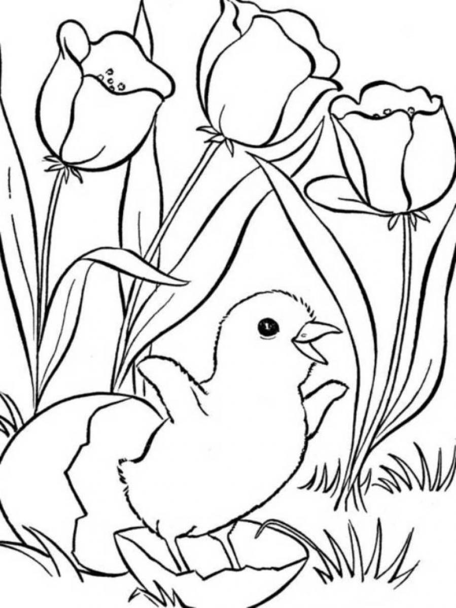 899x1200 Spring Coloring Pages Chicks And Tulips