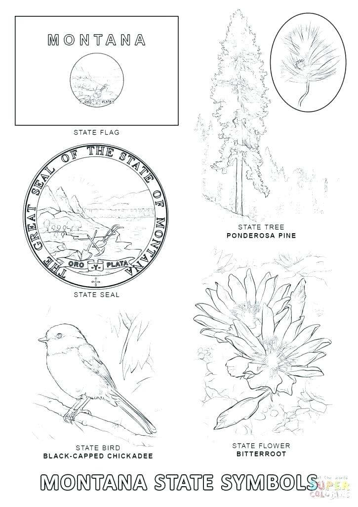 725x1024 Arkansas Coloring Pages Coloring Pages State Symbols Coloring