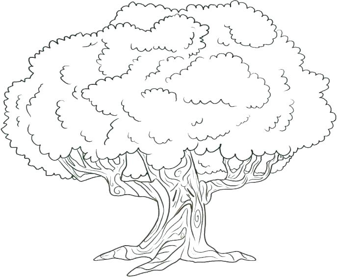 687x565 Coloring Page Of A Tree Free Tree Coloring Pages New Tree Coloring