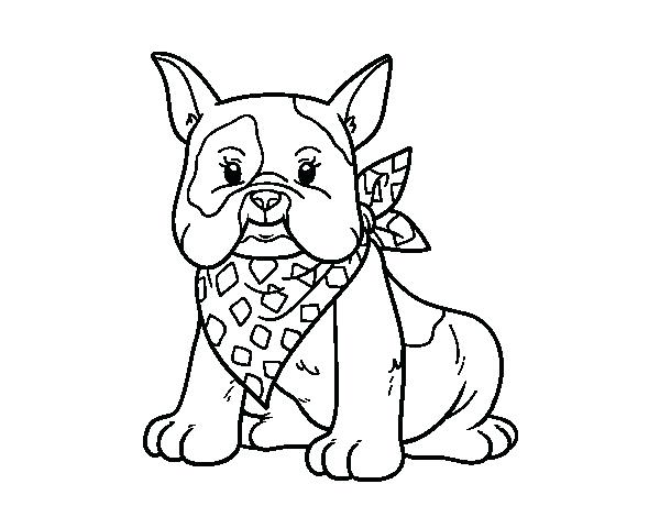 The Best Free Bulldog Coloring Page Images Download From 50 Free