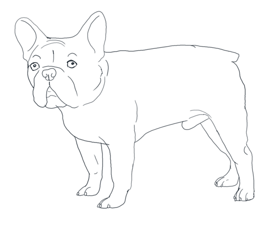 900x742 French Bulldog Coloring Pages Best Lola Images