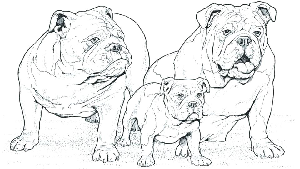 960x540 French Bulldog Coloring Sheets Corgi Coloring Pages Welsh Page