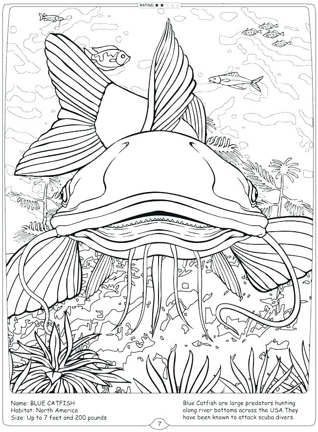 catfish coloring pages - Clip Art Library | 882x650