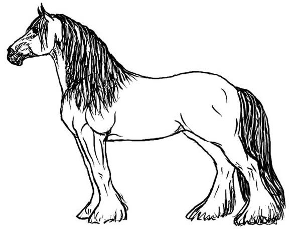 600x472 Image Result For Pictures Of Horses To Color Coloring Pages