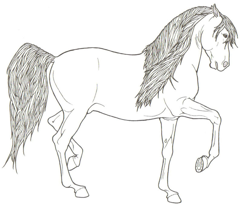 800x685 Rearing Horses Coloring Pages