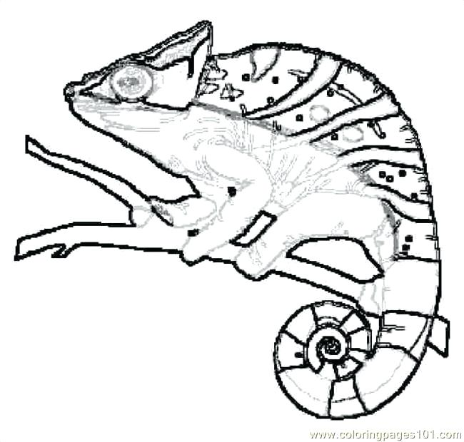 650x620 Lizard Coloring Pages Best Lizard Coloring Pages For Coloring