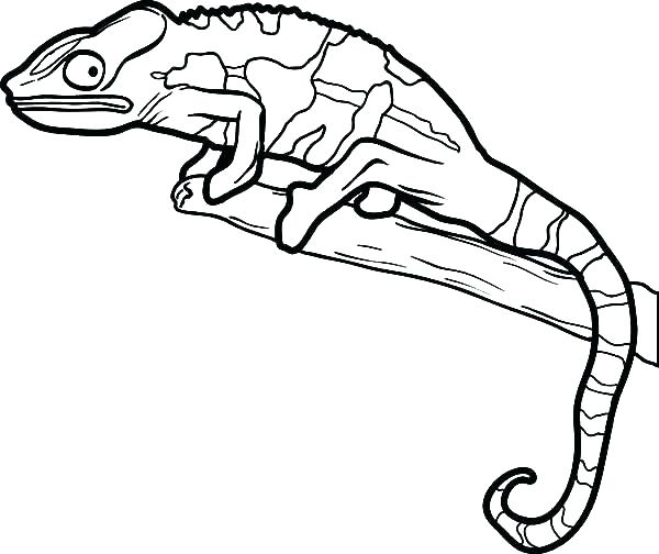 600x504 Lizard Coloring Pages Cartoon Lizard Coloring Pages Newt Coloring