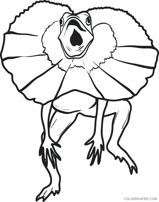 553x700 Lizard Coloring Pages Frilled Lizard Coloring Pages Monitor Lizard