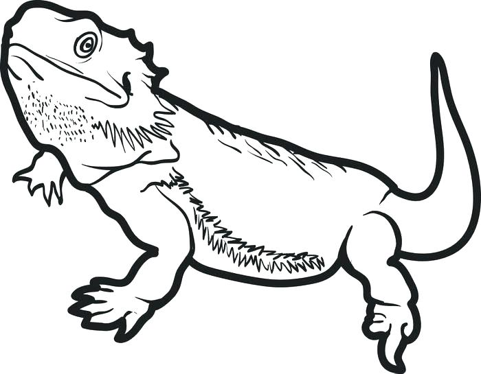 700x545 Lizard Coloring Pages Lizards Coloring Pages Frilled Lizard