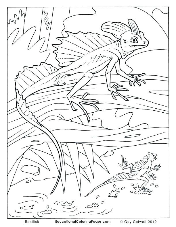 612x792 Lizard Coloring Pages Reptile Coloring Pages Reptile Coloring