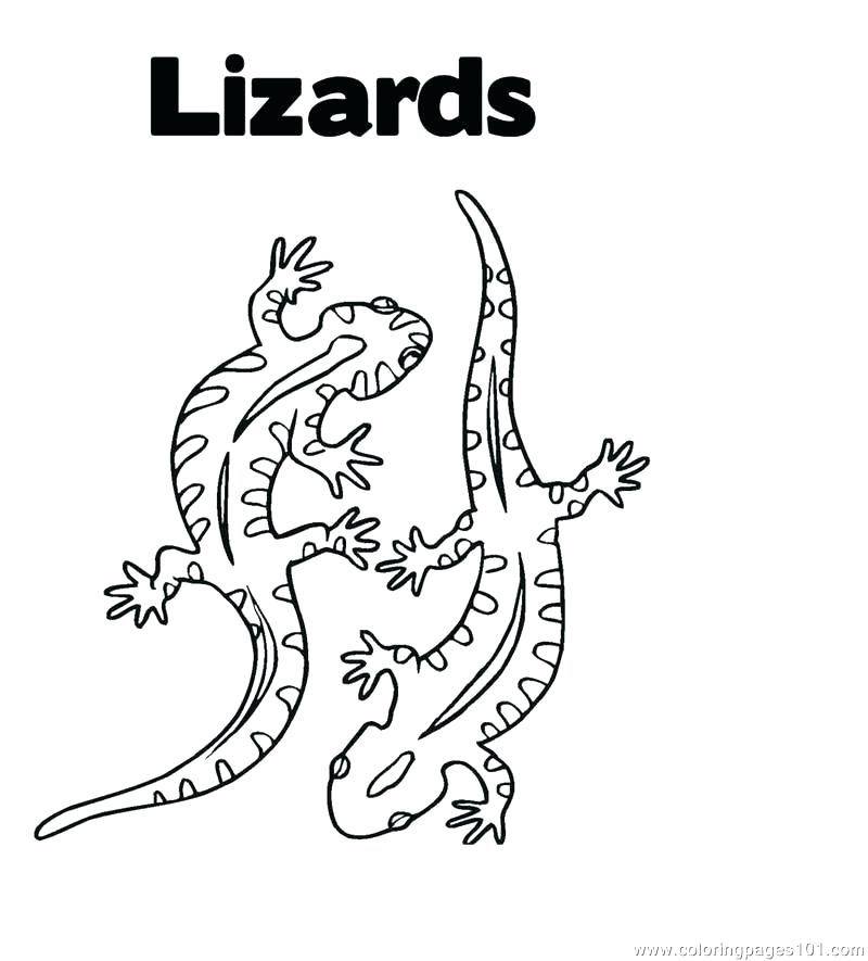 800x885 Lizards Coloring Pages Willpower Lizard Pictures To Color Coloring