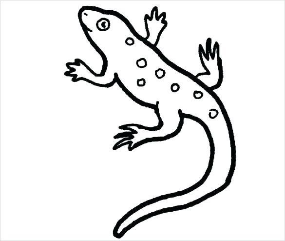 585x494 Reptile Coloring Page Amphibian Coloring Pages Reptile Coloring