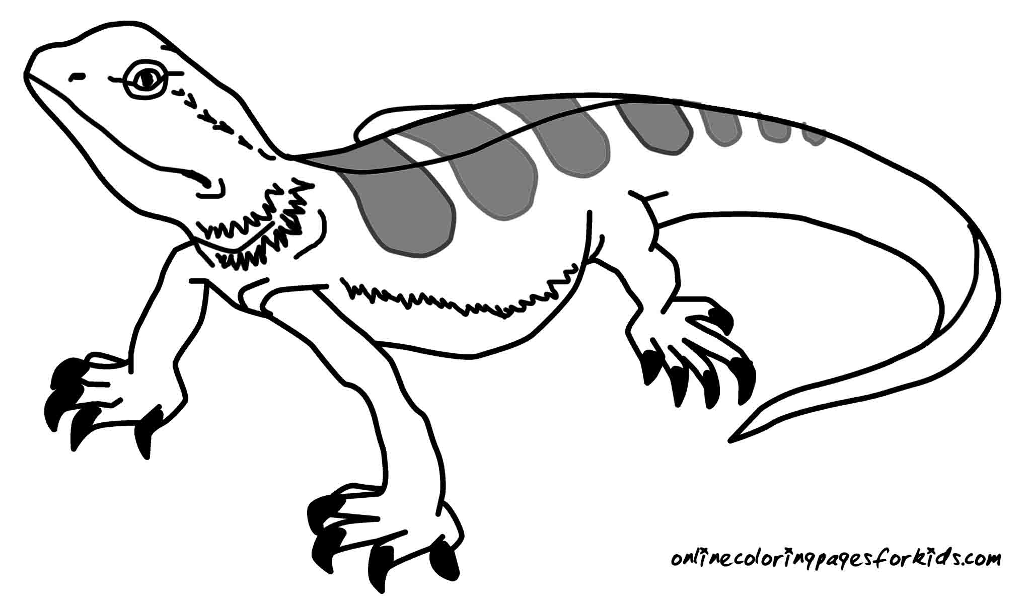 2040x1202 Special Lizard Colouring Pages Best Coloring And Awesome Co