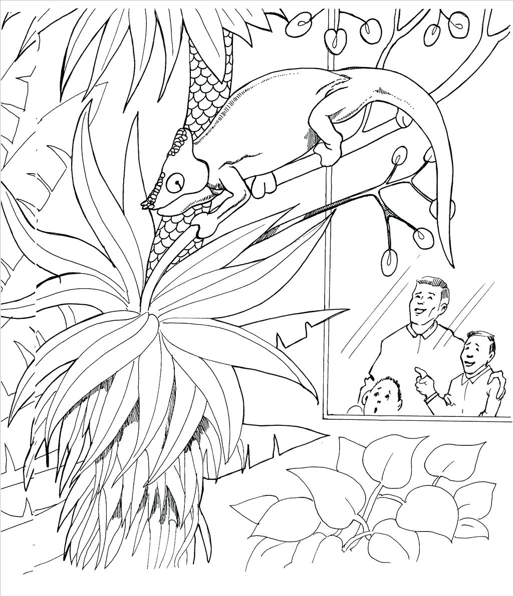 1024x1191 Coloring Pages Lizard Coloring Pages Best Wallpaper Frilled