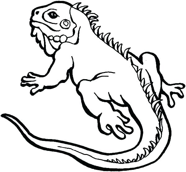 600x554 Lizard Coloring Page