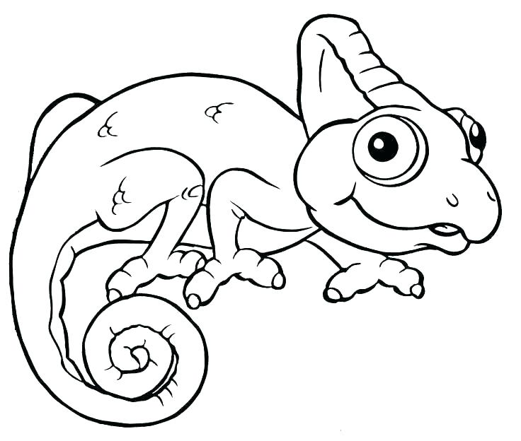 736x624 Lizard Coloring Page