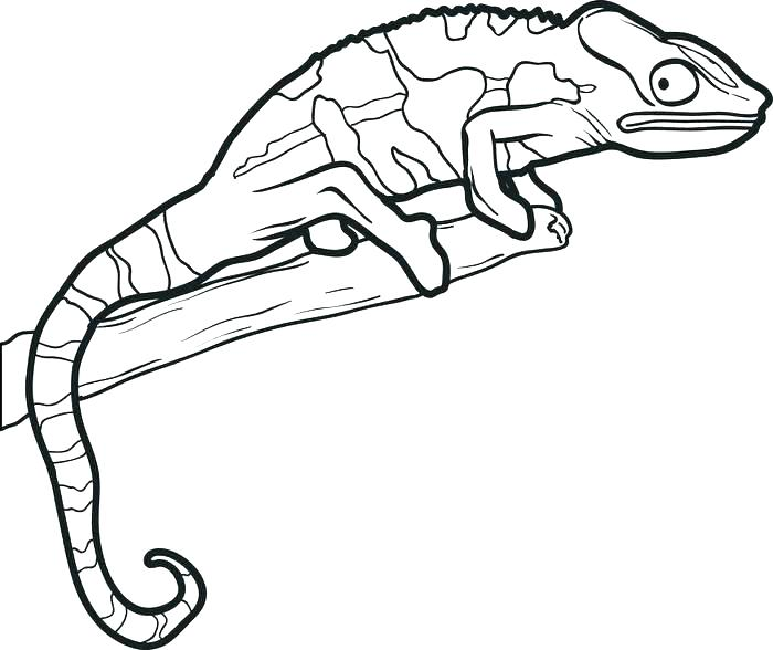 700x588 Lizard Coloring Pages