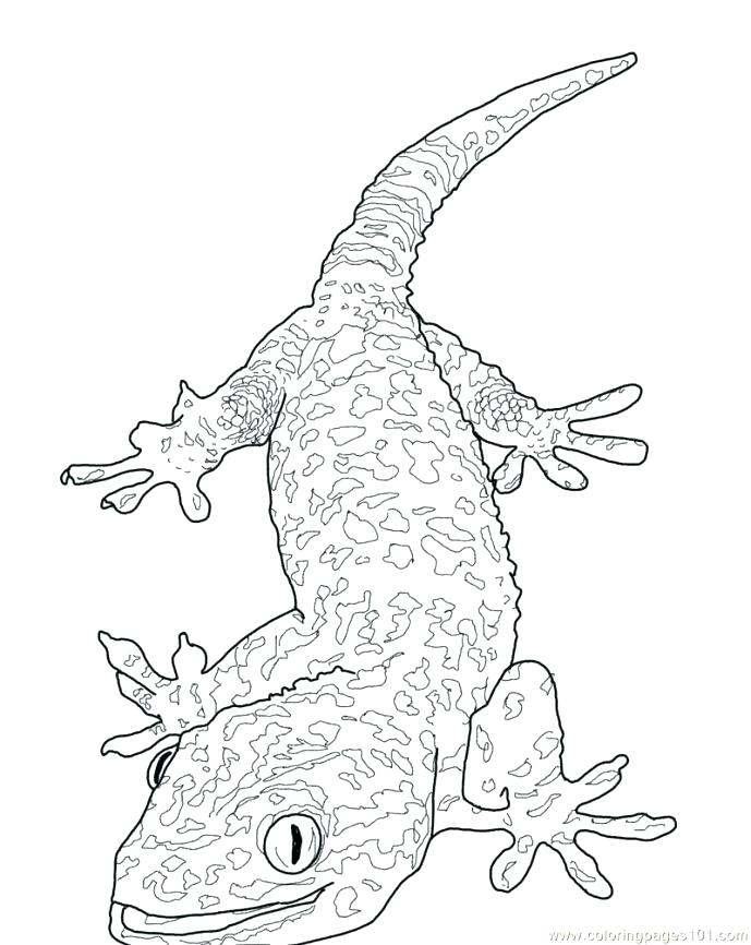 689x866 Lizard Coloring Page Baby Lizard Coloring Pages Fancy Page S