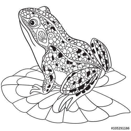 500x500 Image Result For Frog Coloring Pages For Adults Templates