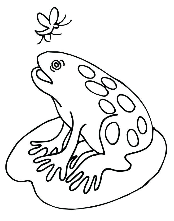736x937 Frog Color Pages Frog Color Sheet For Kids Kiddo Shelter Free Frog
