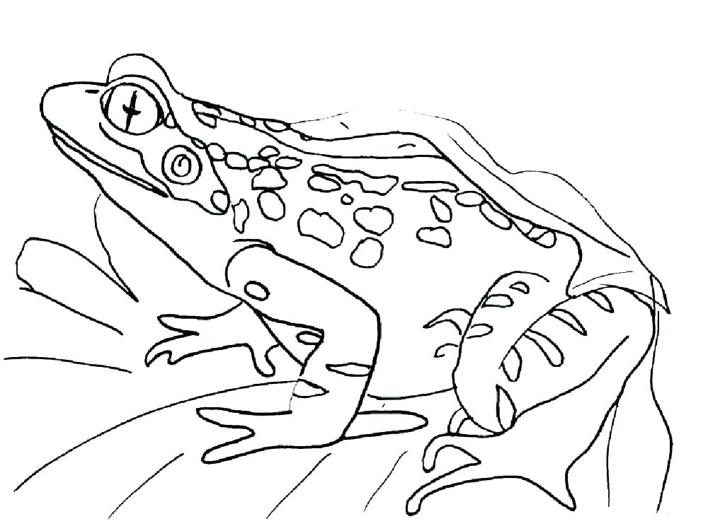 1024x744 Coloring Pages Frog Toad Coloring Pages Toad Coloring Page Toad