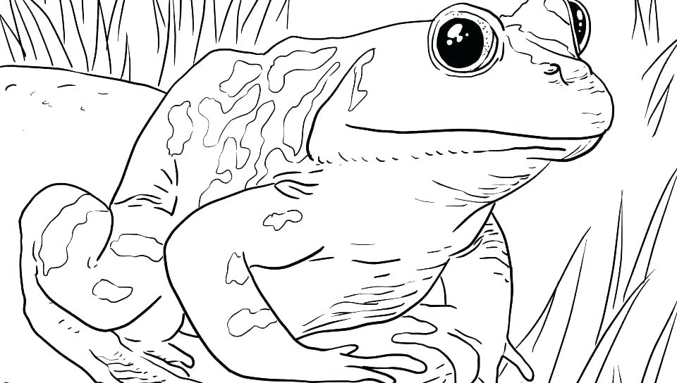 960x544 Toad Coloring Page Frog And Toad Coloring Pages Tadpole Coloring