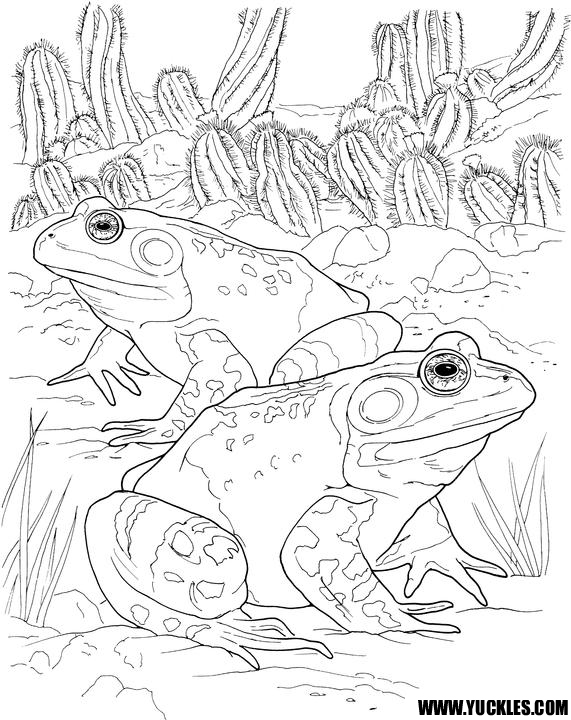 571x720 Toad Coloring Page