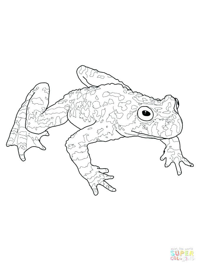 671x895 Coloring Pages Frog
