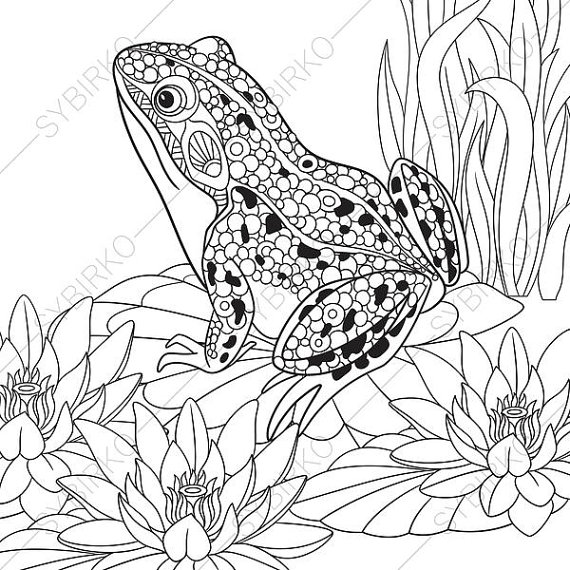 570x570 Frog Coloring Pages Animal Coloring Book Pages For Adults