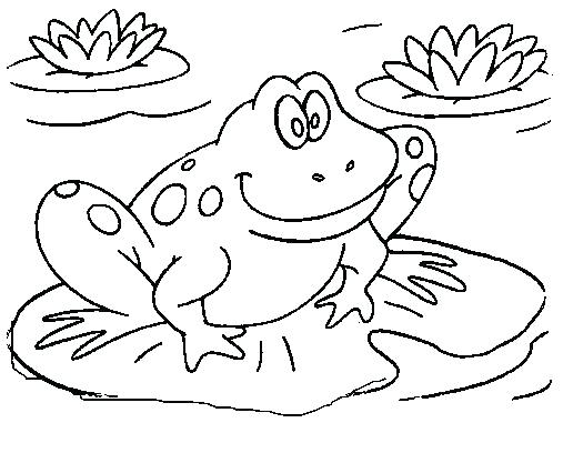 507x408 Frog Color Page Printable Frog Pictures Kids Coloring Kids