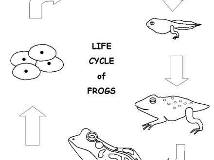 440x330 Frog Life Cycle Coloring Page, Frog Life Cycle Coloring Page