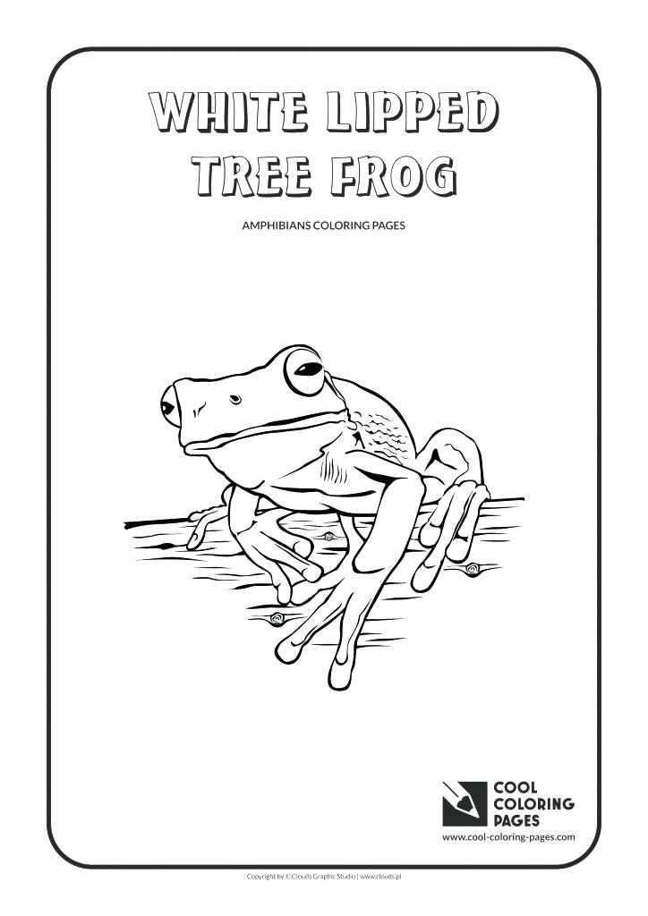 724x1024 Frog Life Cycle Coloring Pages Free Page Printable Leap Of Tree