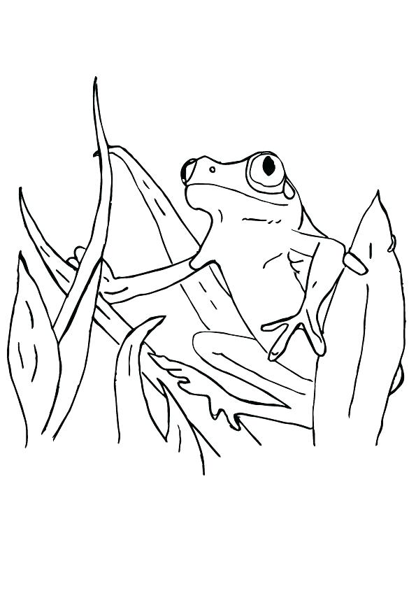 595x842 Tadpole Coloring Page Tadpole Coloring Page Red Eye Tree Frog