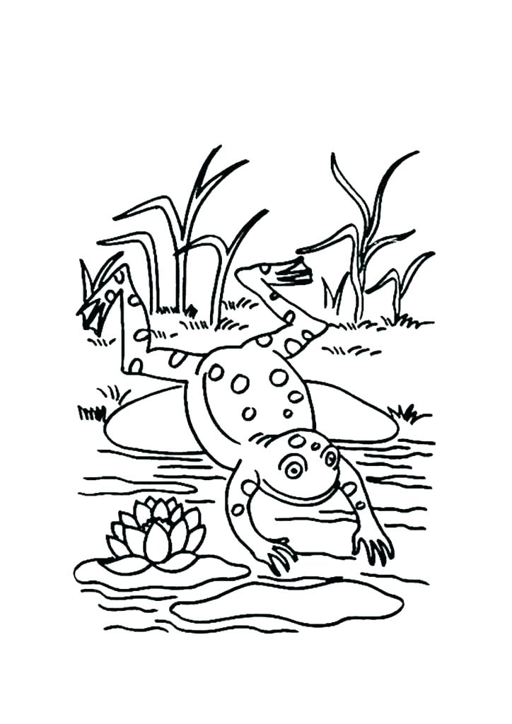 724x1024 Frog Life Cycle Coloring Page