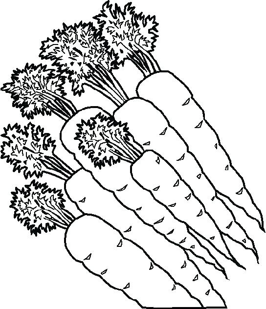 544x632 Vegetable Coloring Pages Delightful Vegetable Coloring Pages Fee