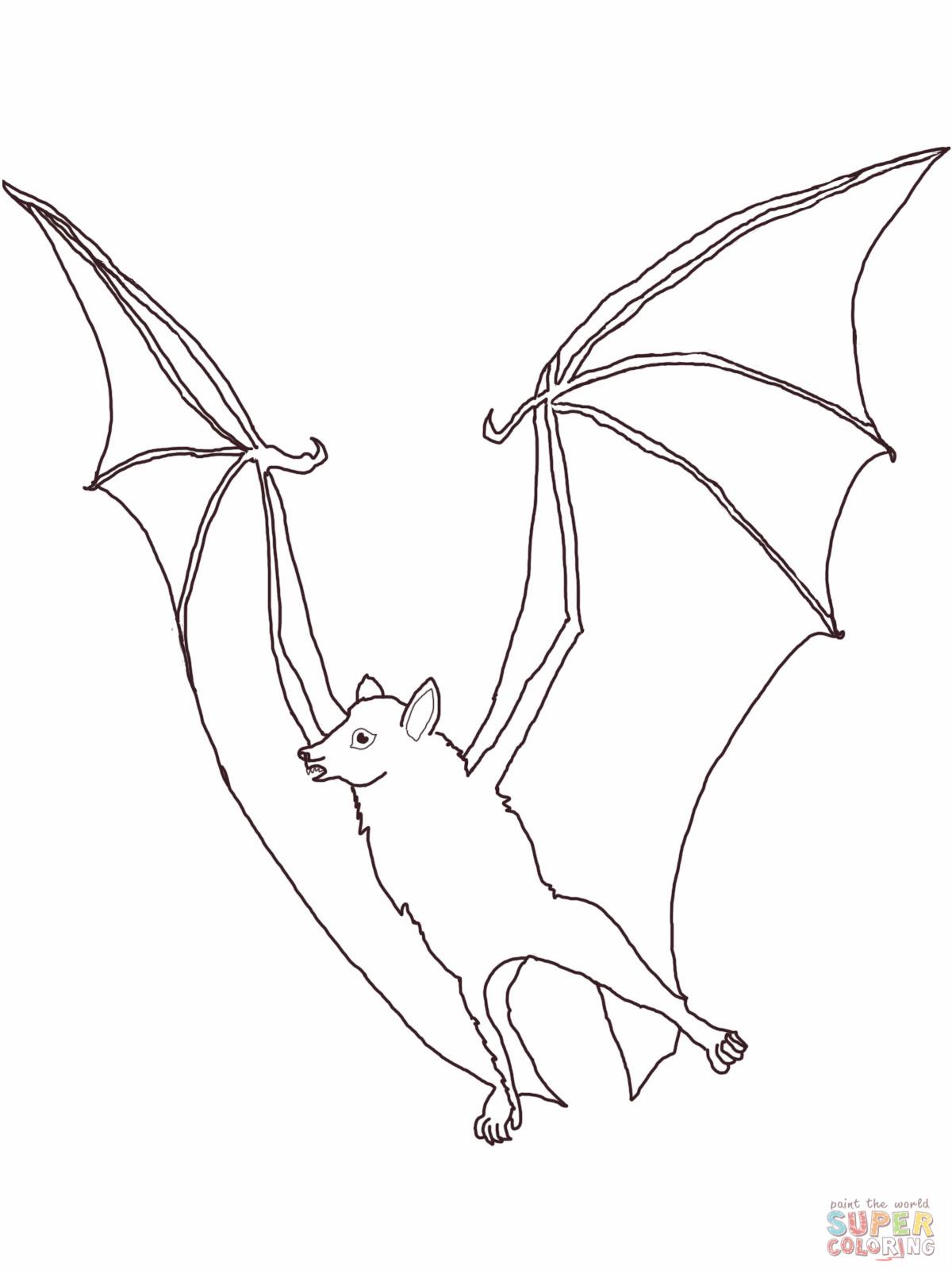 1200x1600 Fruit Bat Coloring Page Fruit Bats Bats