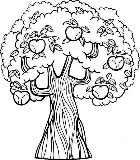 570x650 Fruit Tree Coloring Page Food Fruit Trees