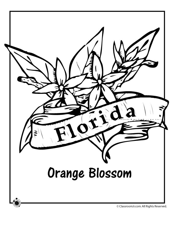 680x880 Best Florida Images On Coloring Books, Coloring