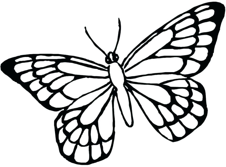 863x639 Appealing Monarch Butterfly Coloring Pages Coloring Pages Full