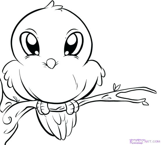 554x500 Cute Coloring Pages How To Draw A Cute Bat Step Recipes To Try