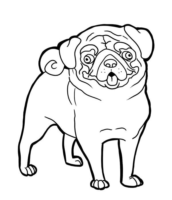 600x700 Pug Funny Face Coloring Page Color Luna