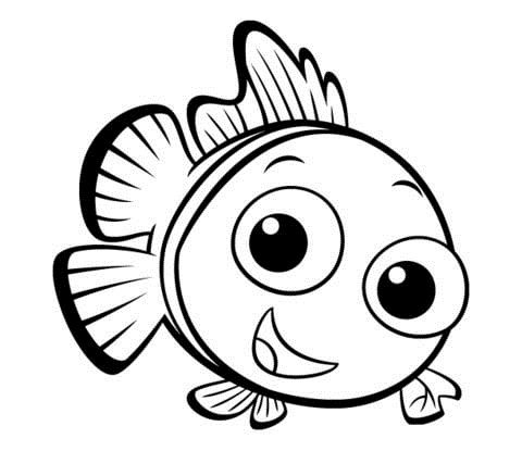 480x415 Small Fish With Funny Face Fish Kids Net