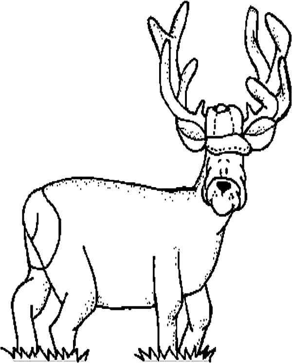 600x745 Elk Funny Face Coloring Pages