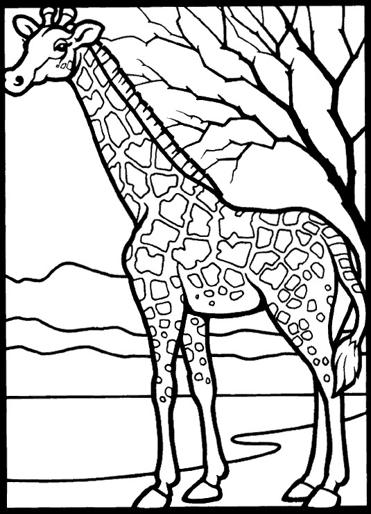 535x740 Kids N Coloring Pages Of Giraffe