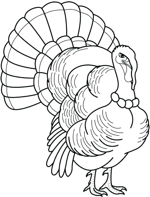 592x776 Coloring Turkeys Funny Turkey Coloring Pages Funny Thanksgiving